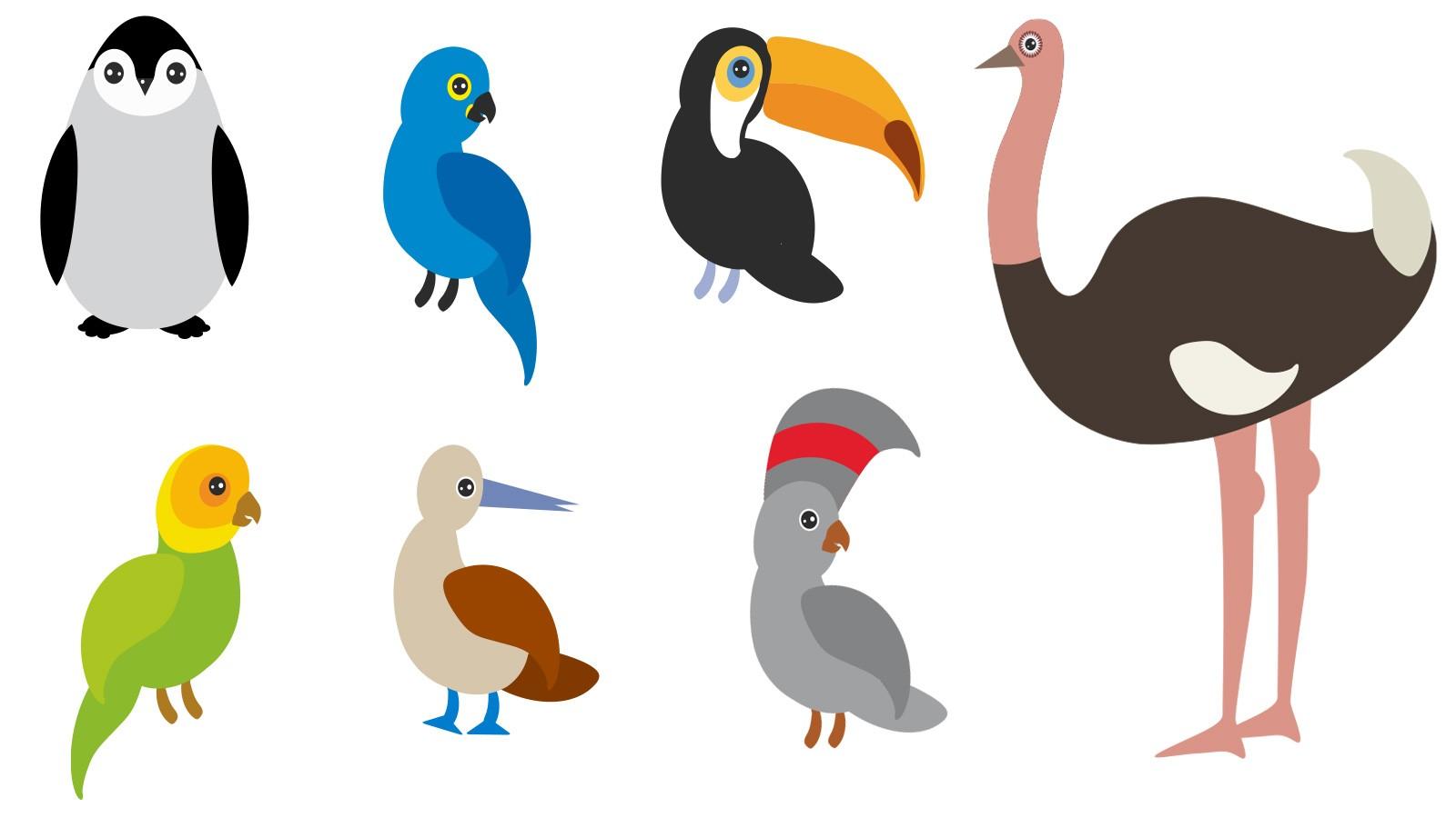 example of birds