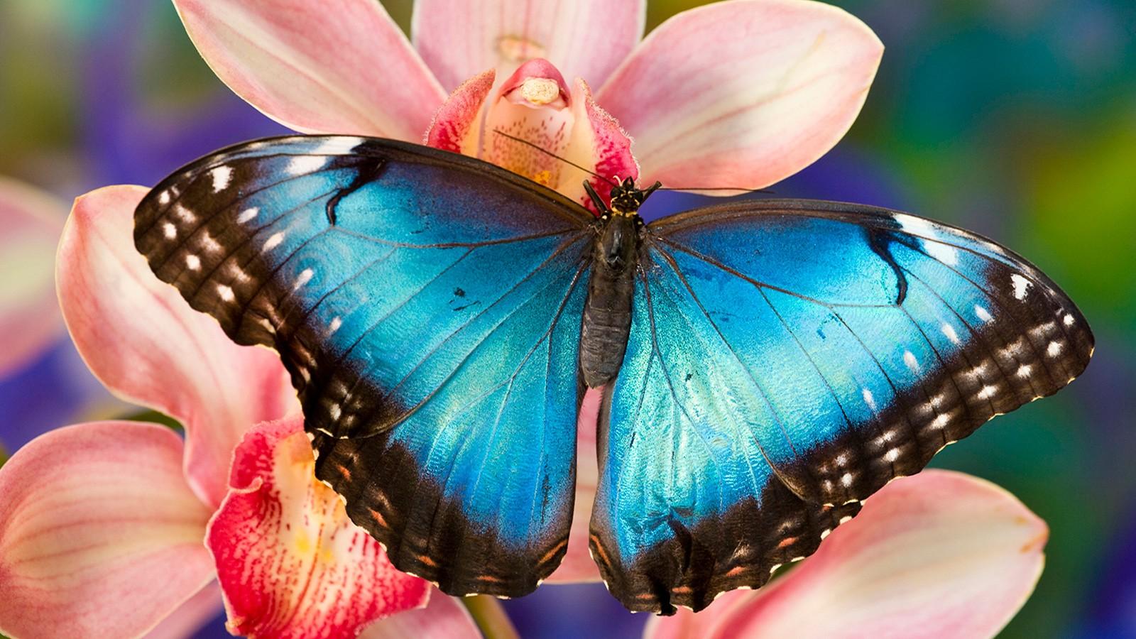 herbivore butterfly drinks nectar