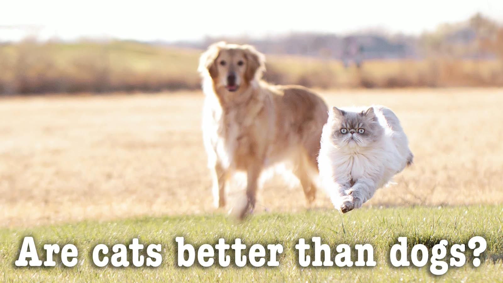 Persuasive essay question cats versus dogs