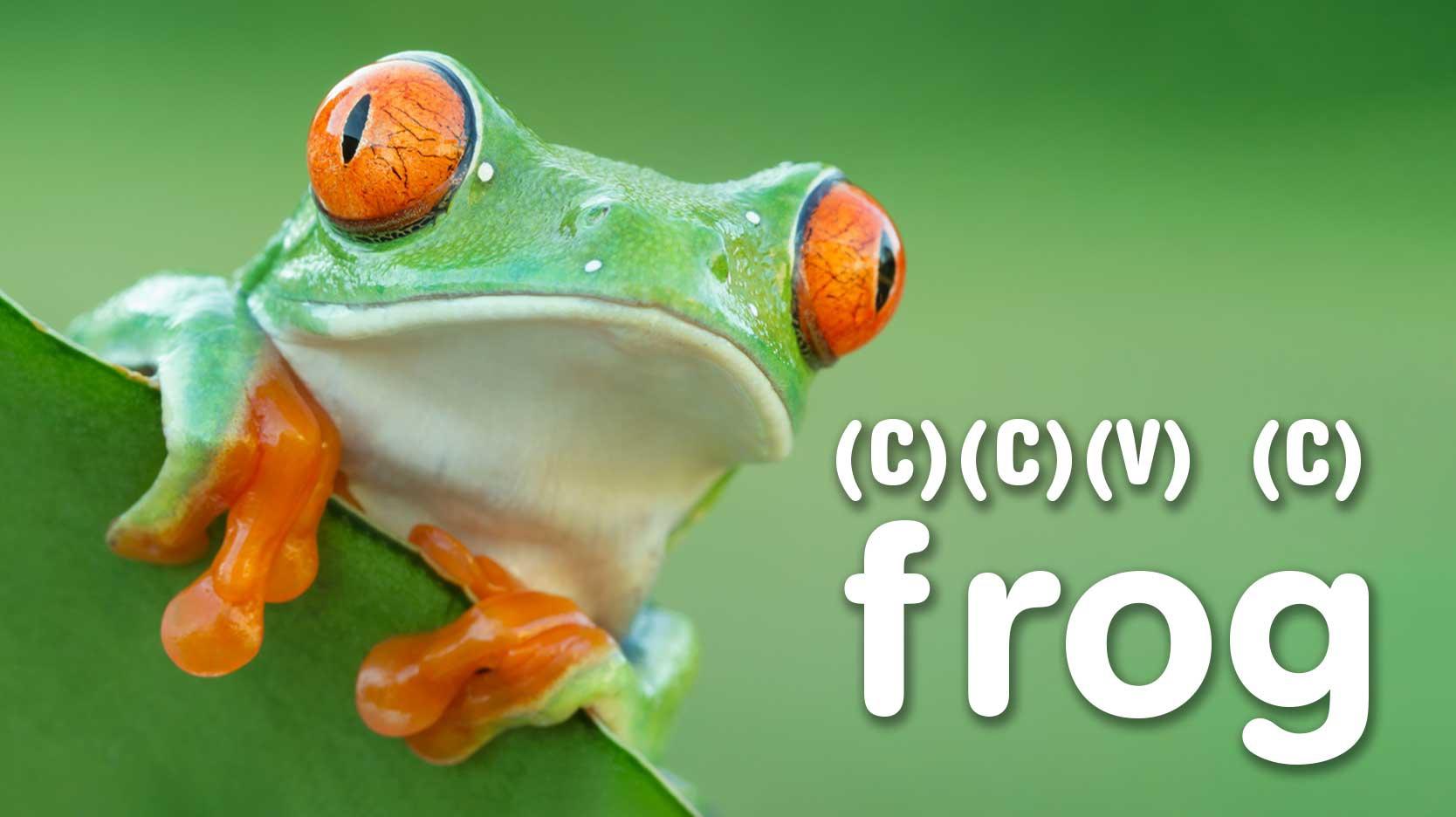 ccvc frog example