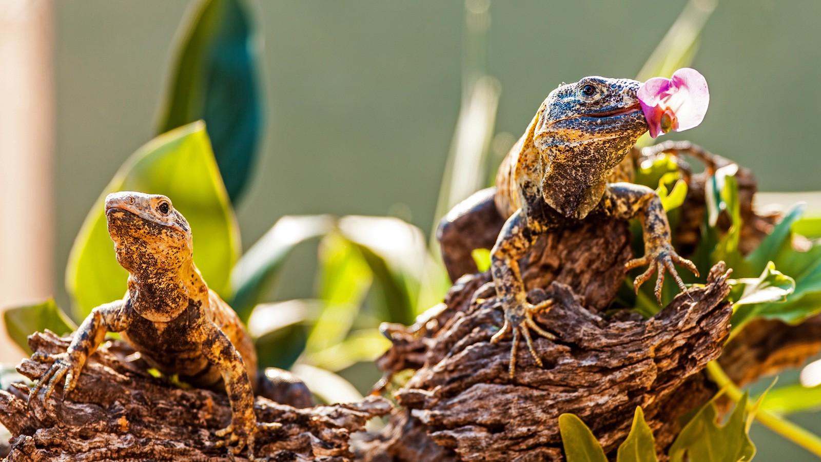 Herbivore Examples: Common Plant-Eating Animals