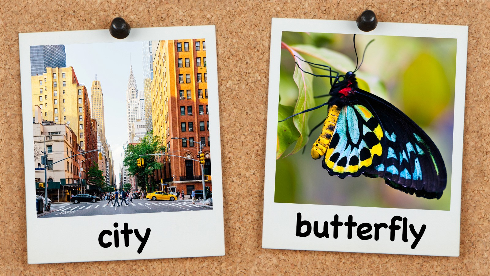 city and butterfly spelling words