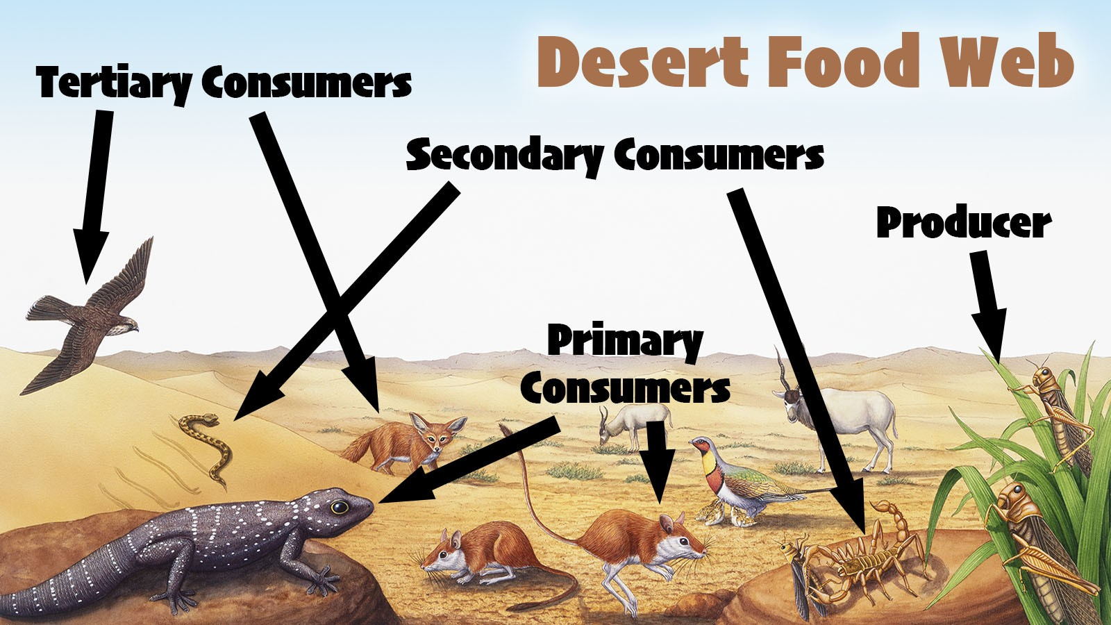 Main Difference Between a Food Chain and a Food Web