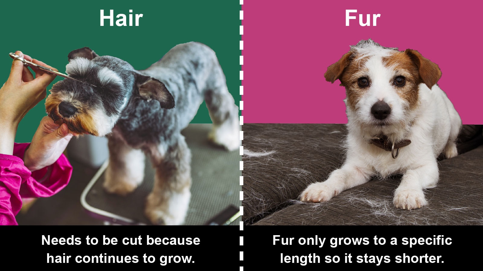 difference between hair and fur on a dog