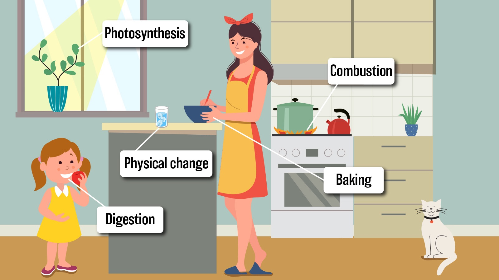 Examples of Chemical Changes in Everyday Life
