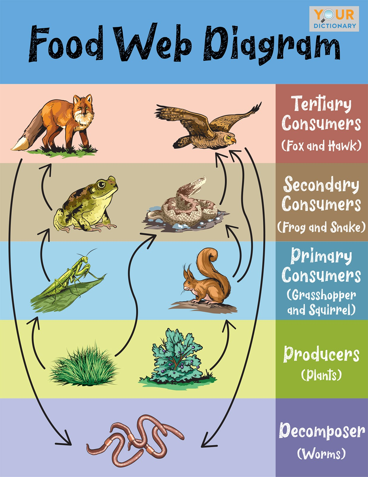 food web diagram example