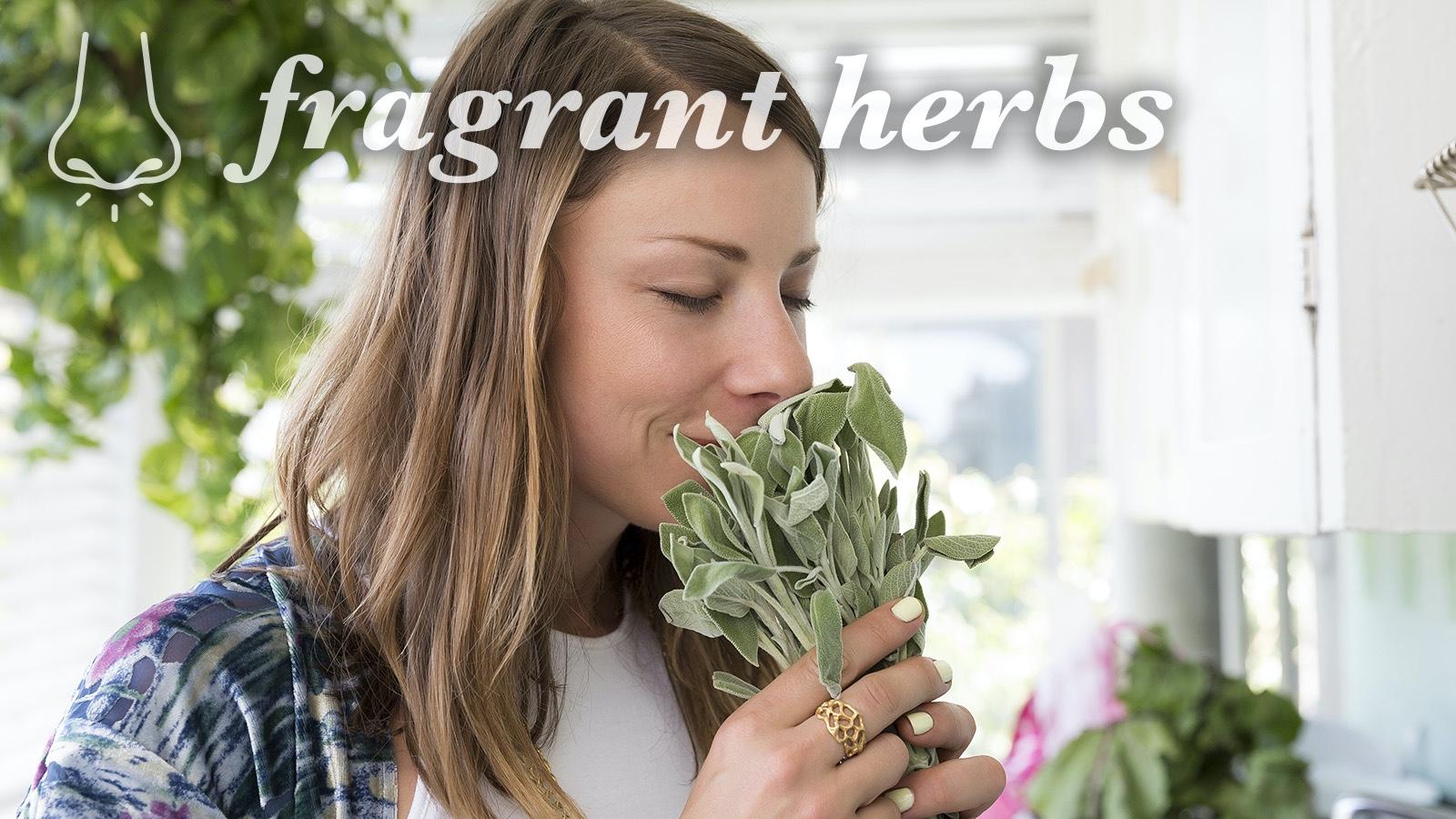 scent sensory word fragrant herbs description