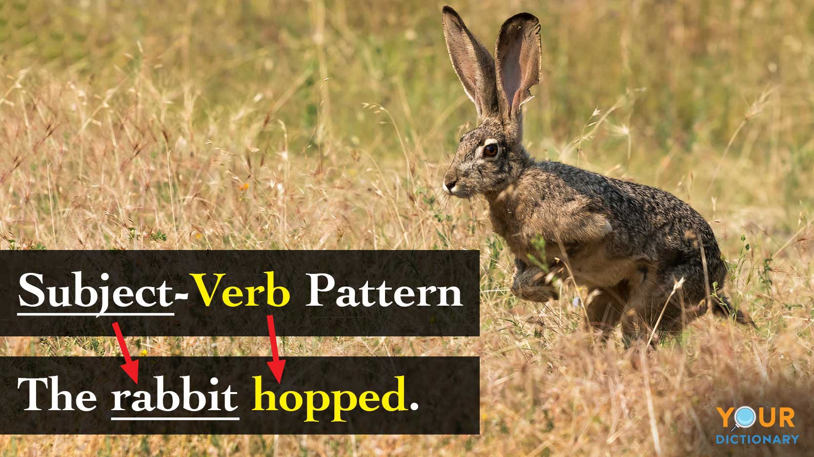 sentence patterns subject-verb example