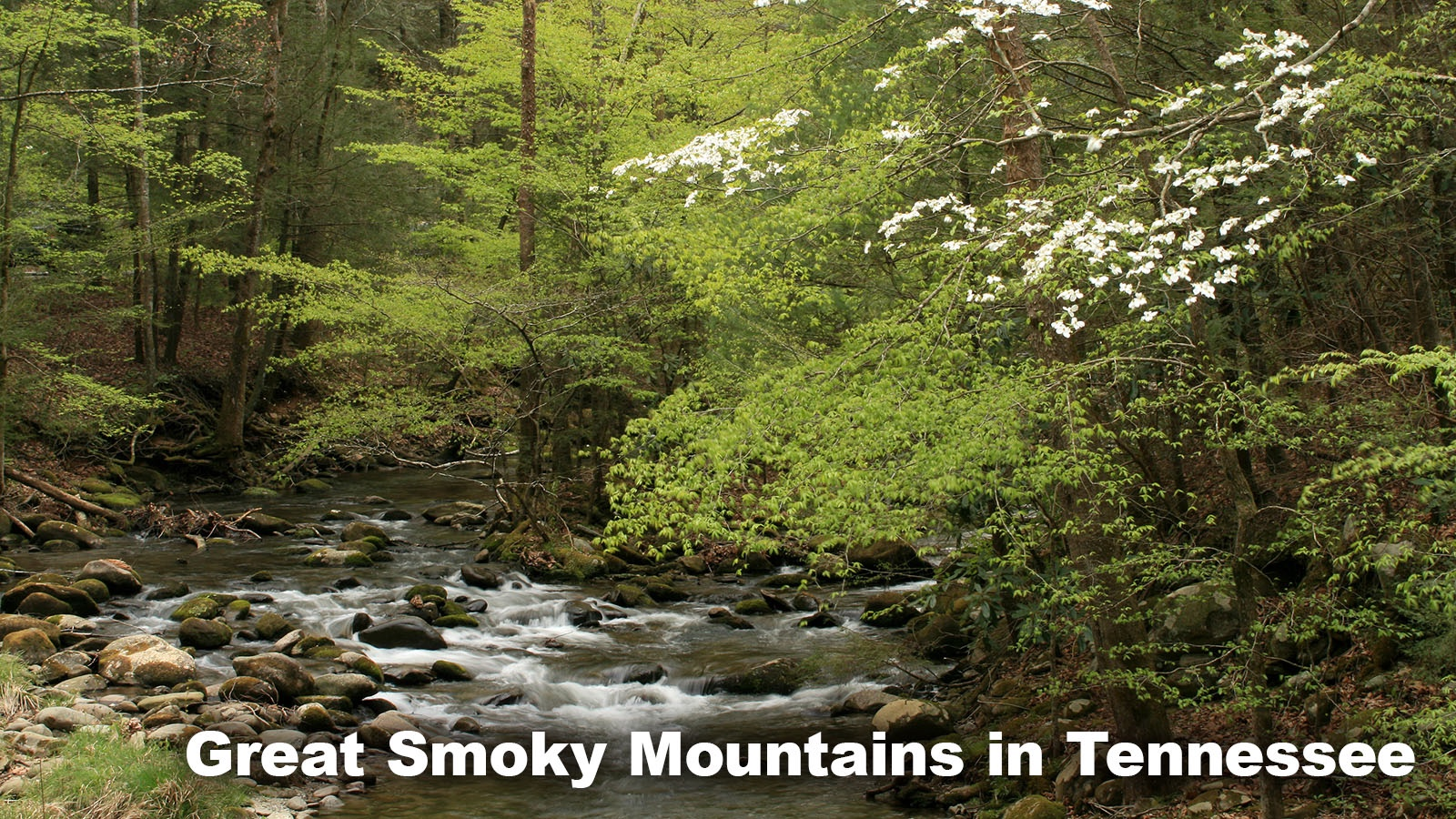 Example Deciduous (Temperate) Forest Great Smoky Mountains