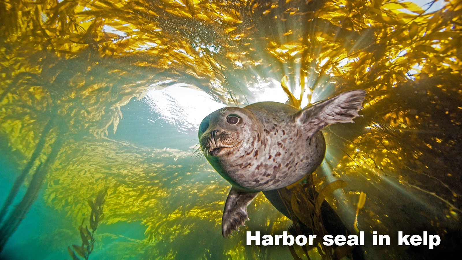 Marine Biome animal harbor seal