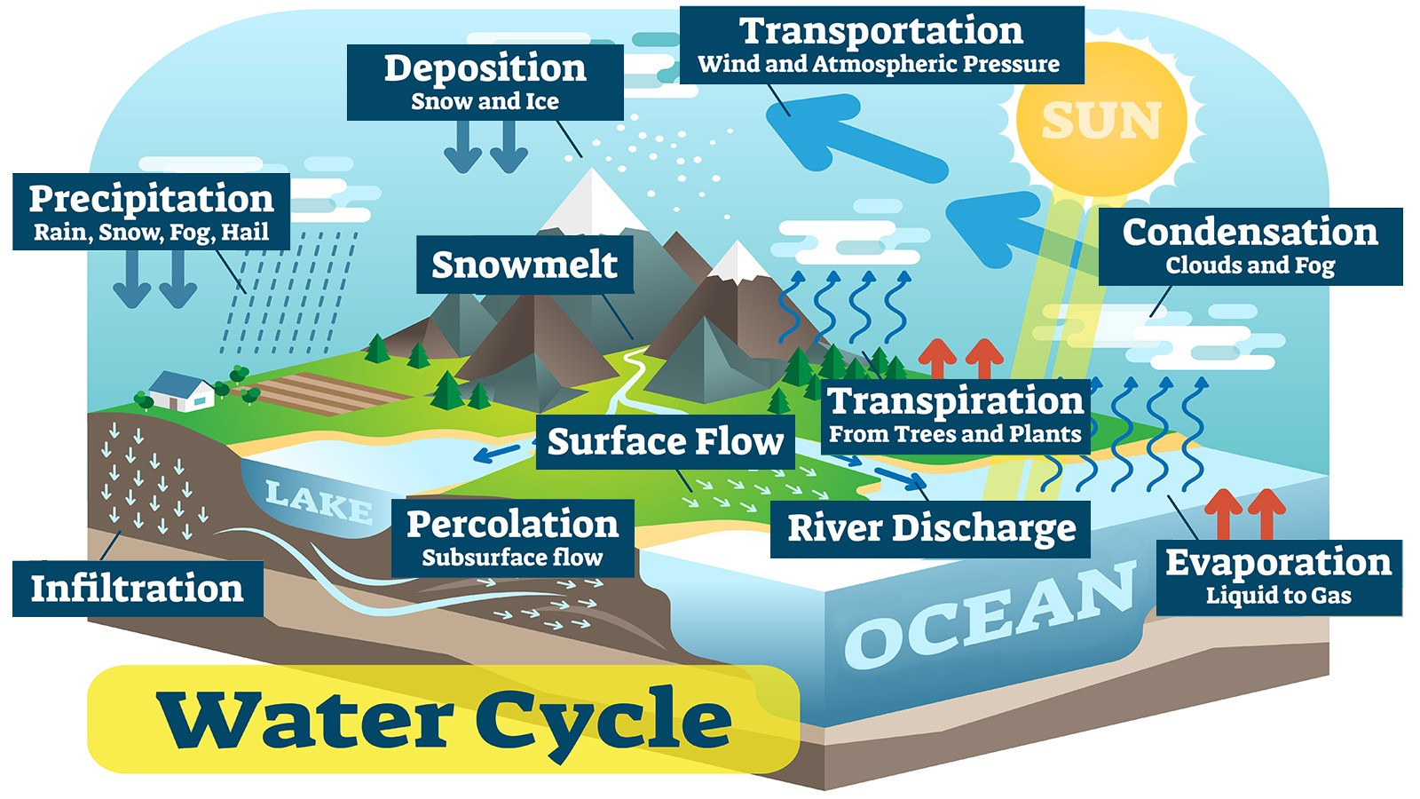 water cycle key biology terms