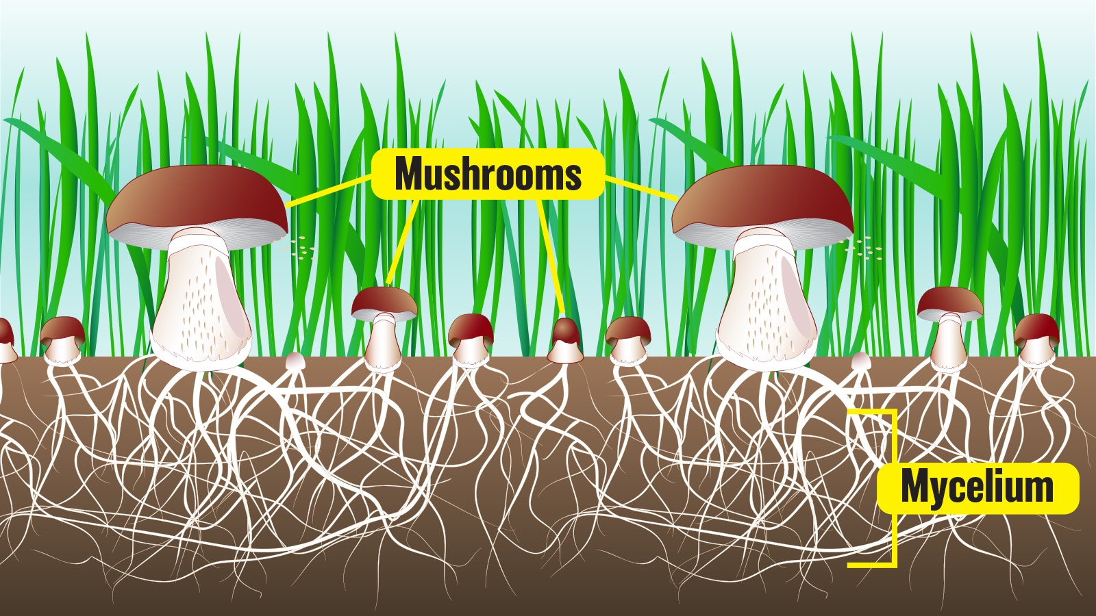 Mushrooms as decomposers