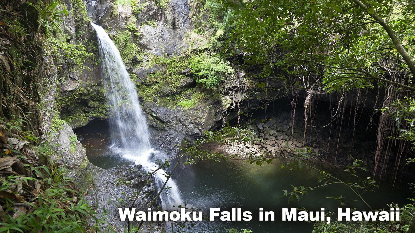 Rainforest Biome in Maui, Hawaii
