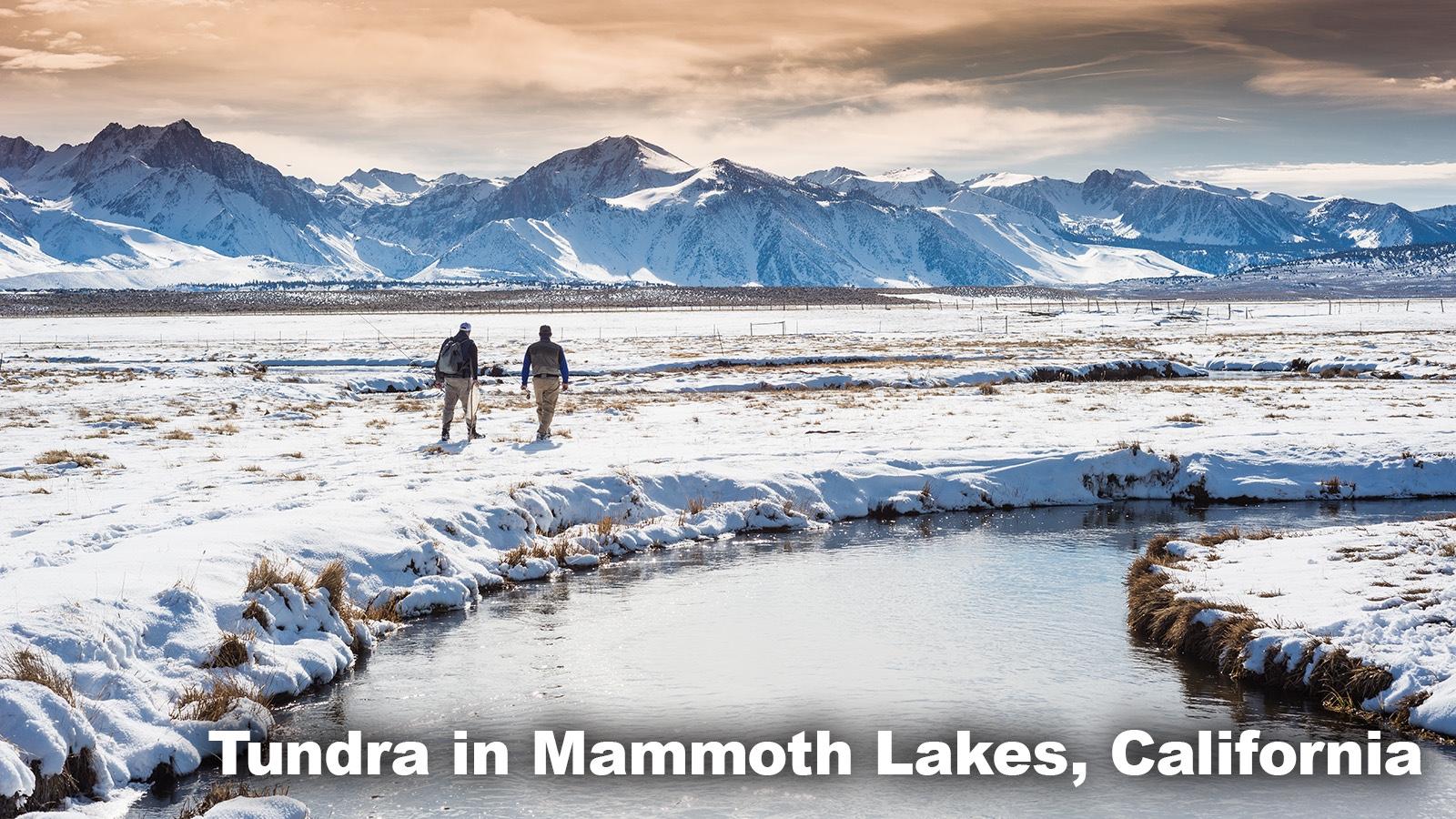 Tundra Biome Mammoth Lakes, California