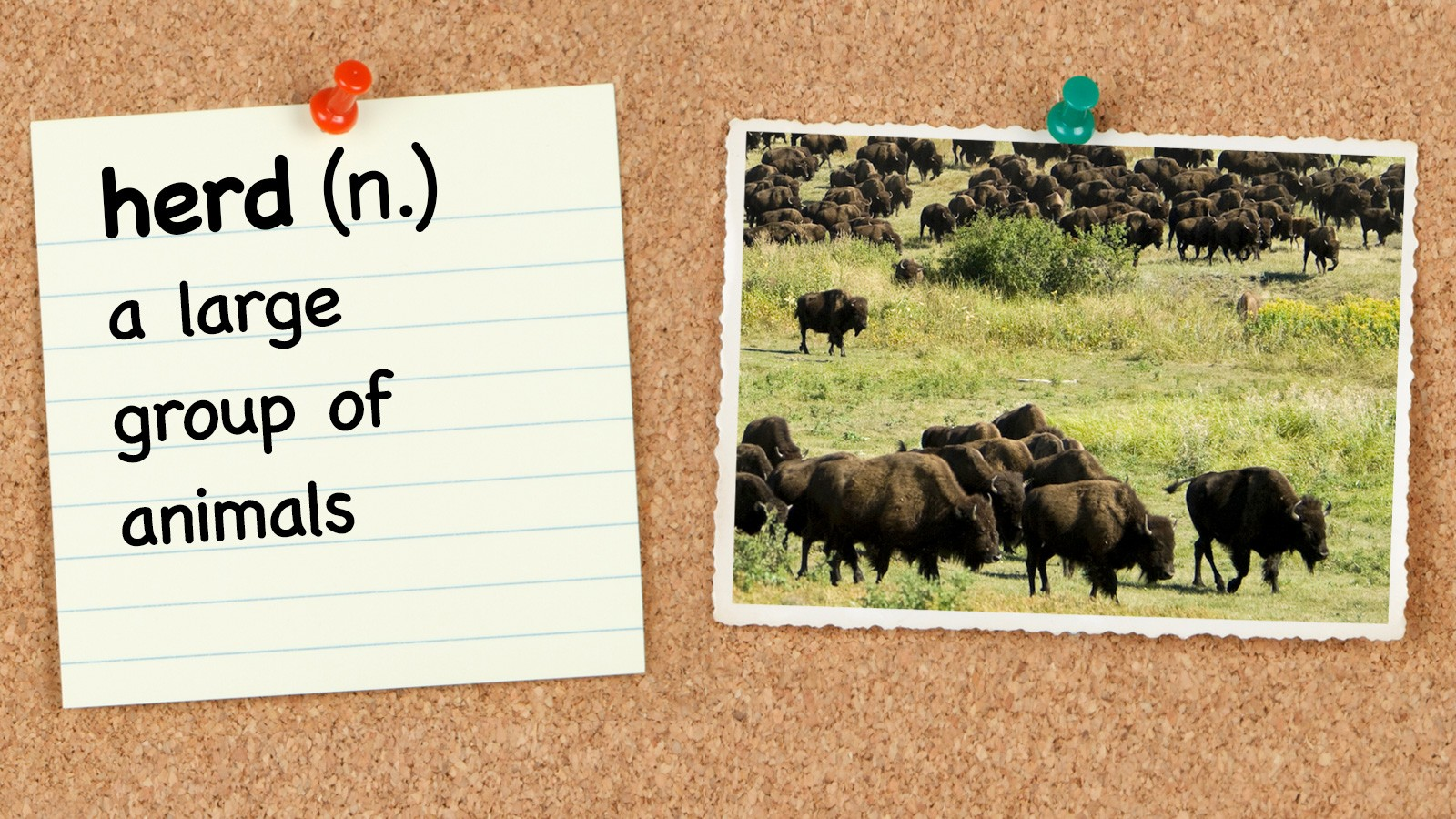 Vocabulary word herd with definition