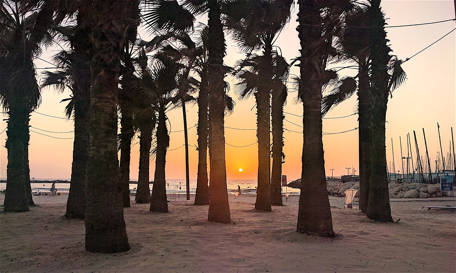 Beach with palm trees in Tel Aviv