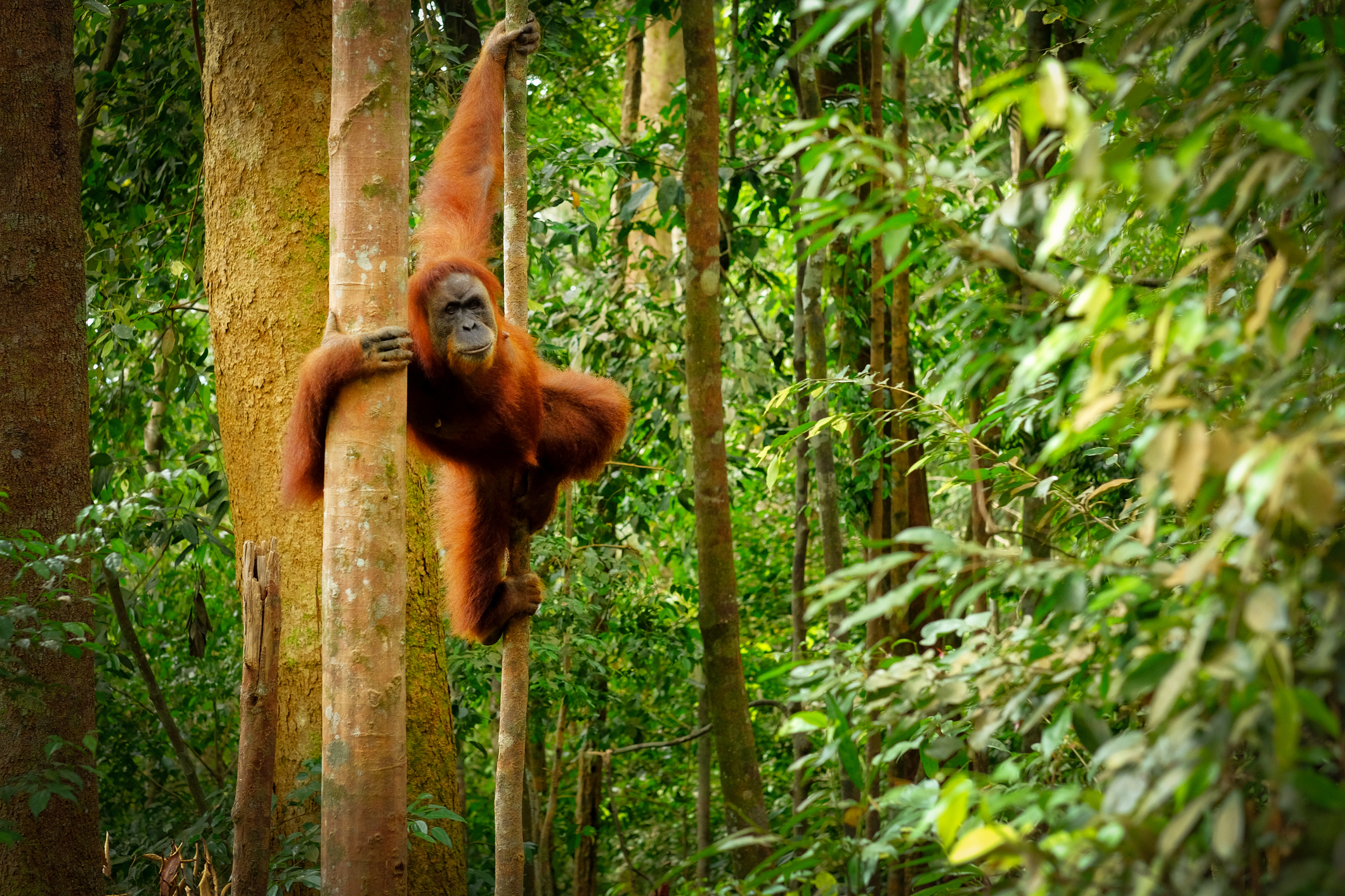 Biggest food brands 'failing goals to banish palm oil ...