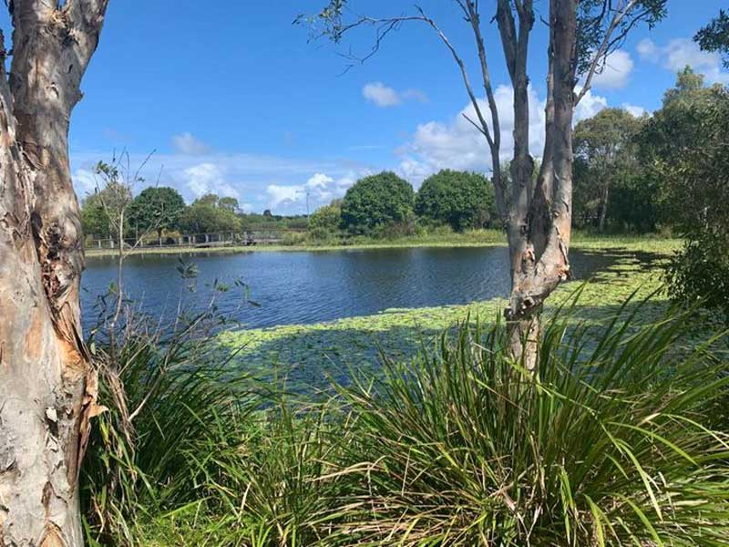 The view that inspired Caloundra's outdoor learning in nature with children.