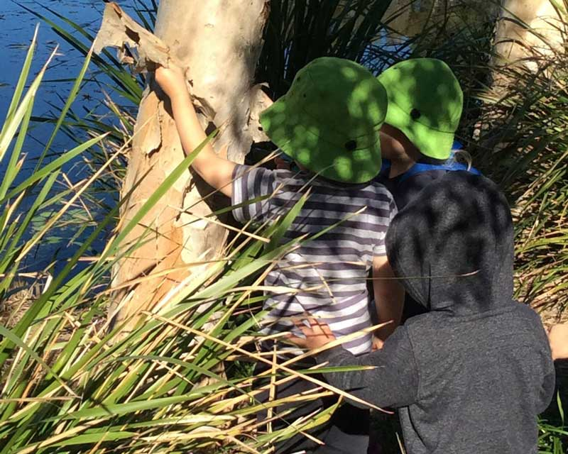 Bushwalking with toddlers on Bush Kindy excursions.
