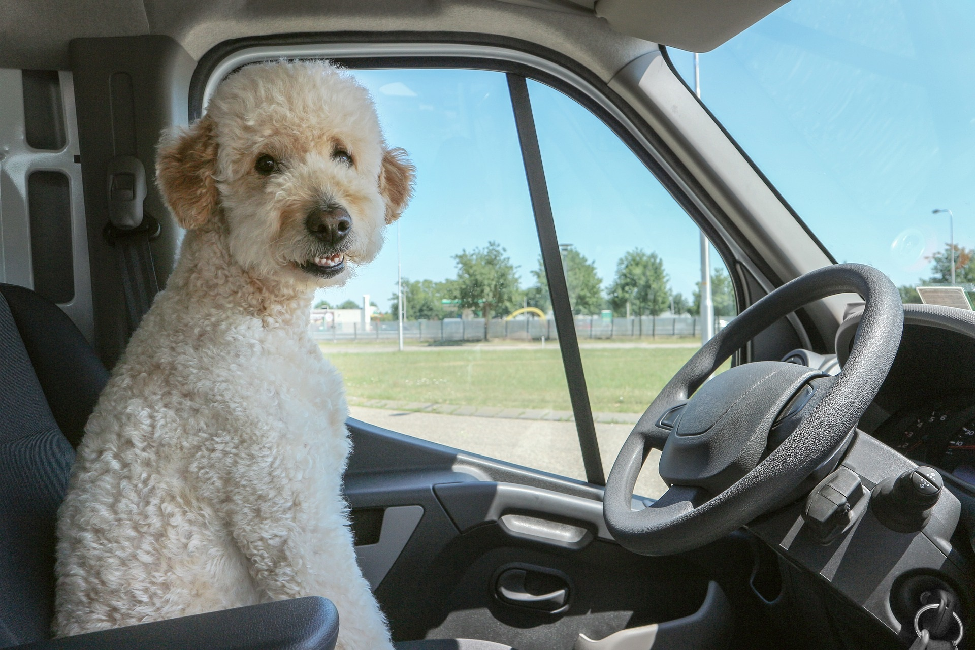 Mutts on Trucks: Ready for Tail Wagging Adventures? 4