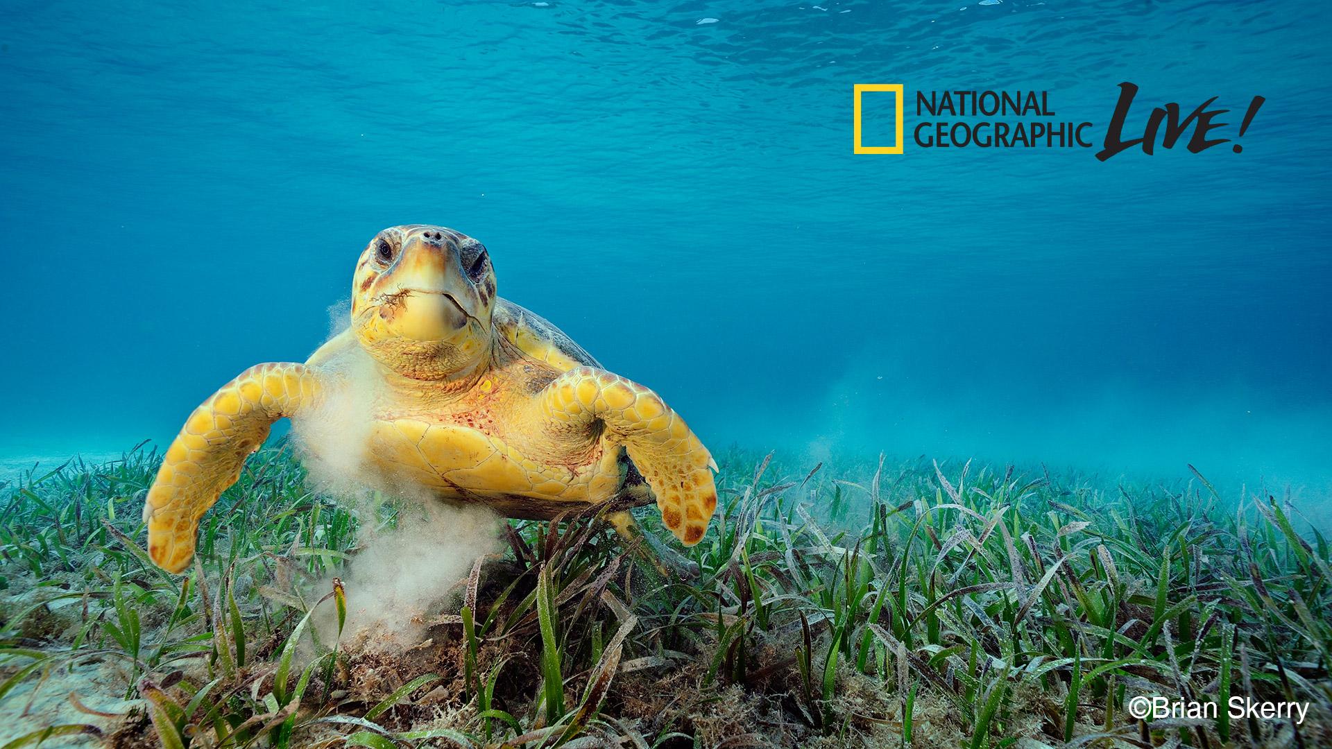 Chương trình National Geographic Live! nổi tiếng (cre: National Geographic)
