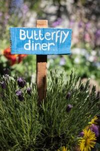 Schmetterlinge mögen zum Beispiel Majoran (Foto: Eleanor Bentall)