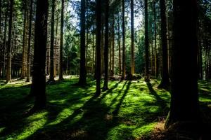 Angenehm kühl und schattig ist es im Wald (Foto: Unsplash)