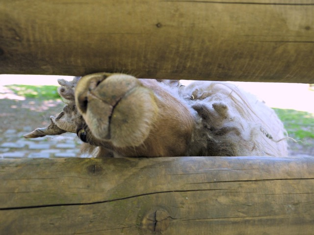 Tierpark besuchen in Köln mit Kindern