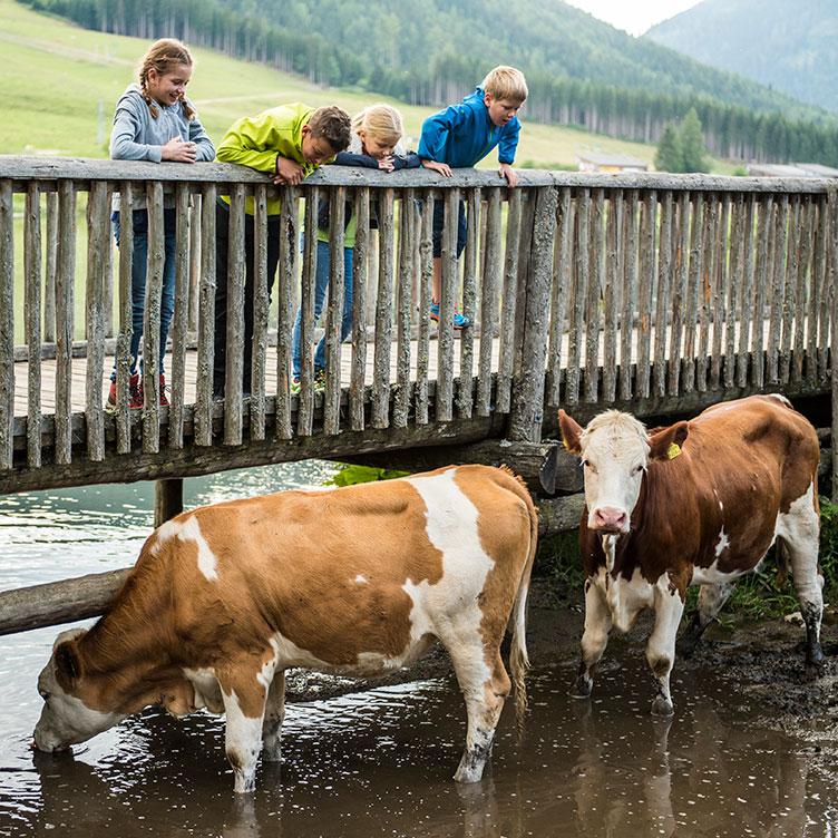 Familienurlaub in der Oststeiermark – Das könnt ihr unternehmen