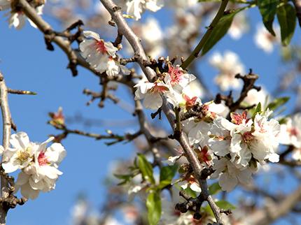 Mallorca: Lieblingsziel für den Frühling