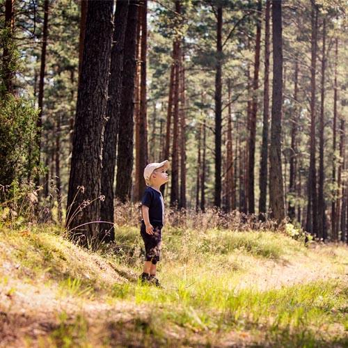 Die Natur erkunden –  Was Kinder im Wald erleben können