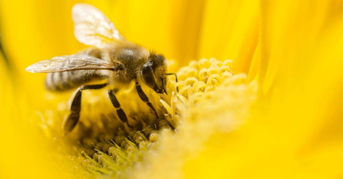 How to Build a Honeybee Hotel for Your Garden: Easy DIY Bee Habitat
