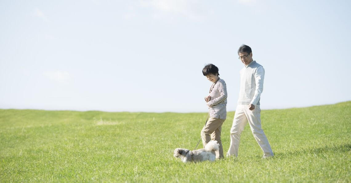 A couple walking their dog in a field
