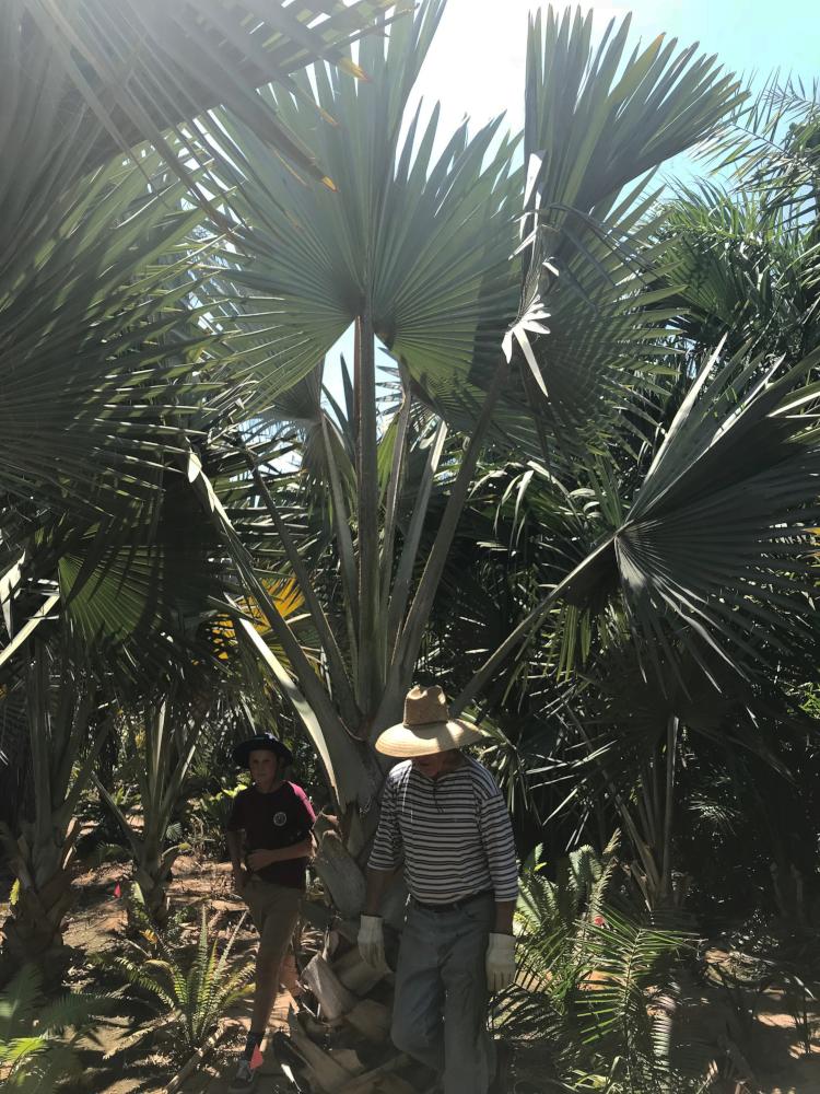 Bismarck Palms at Madera grove