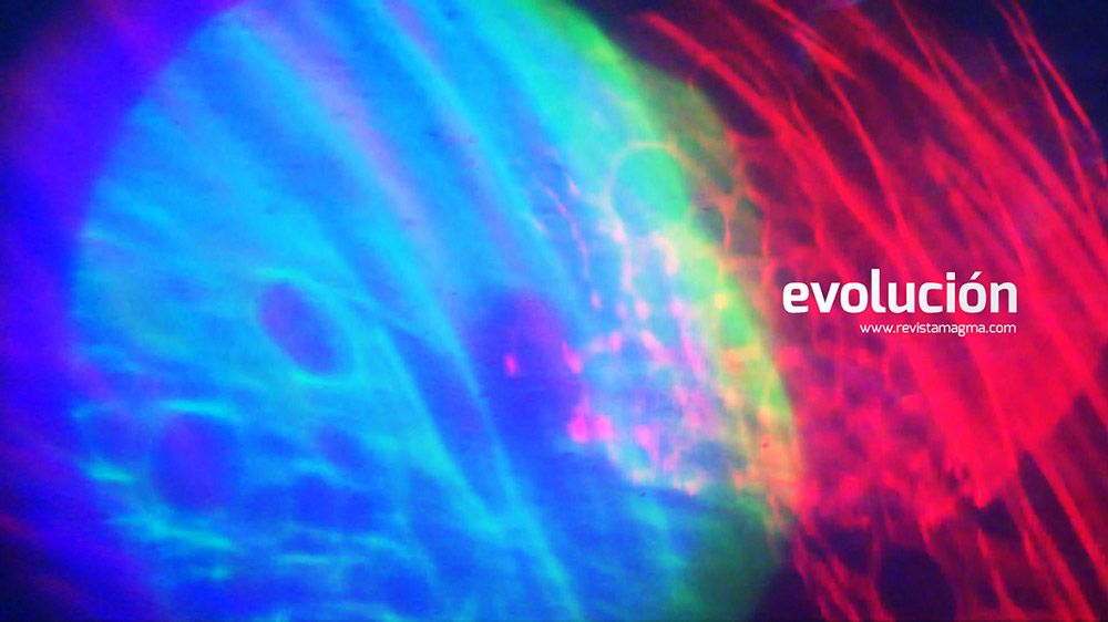 Edicion: Evolución