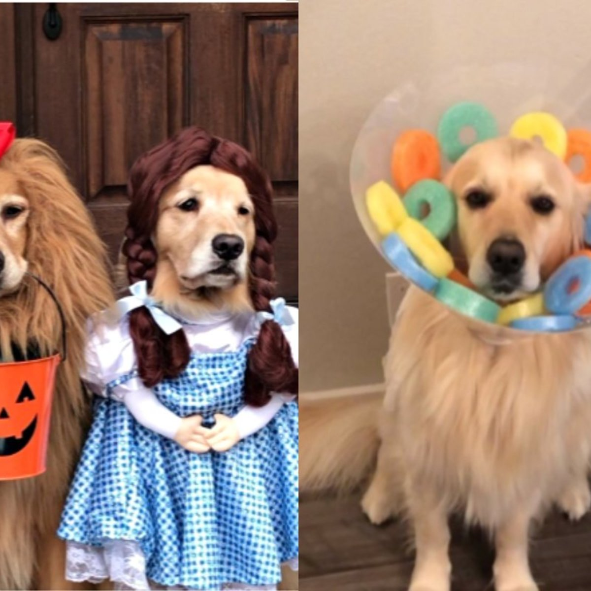 Halloween Dog Costumes Of 2019 That Are Undeniably Adorable
