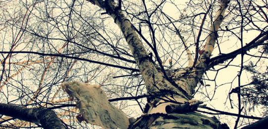 Photo by: Camera Eye Photography