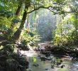 14 Manfaat Hutan Lindung Bagi Kehidupan Manusia dan Lingkungan