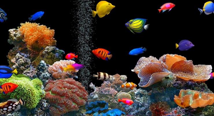 Download 580 Koleksi Gambar Ikan Hias Dalam Akuarium Terpopuler