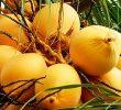 7 Manfaat Kelapa Kuning untuk Ibu Hamil yang Tidak Banyak Diketahui