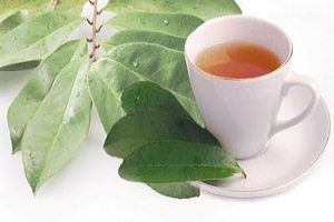 Menyeduh teh merupakan salah satu pilihan tersendiri bagi anda penikmat teh ataupun yang t 5 Manfaat Teh Daun Salam untuk Kesehatan Tubuh