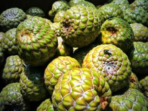 manfaat buah rumbia