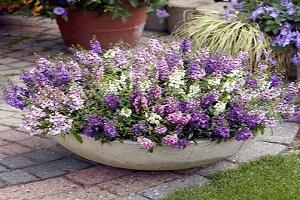 8 Manfaat Bunga Angelonia yang Belum Diketahui