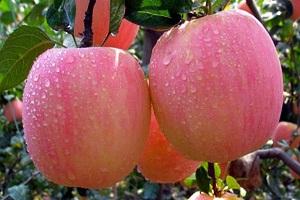 11 Manfaat Makan Apel di Pagi Hari yang Belum Diketahui Banyak Orang