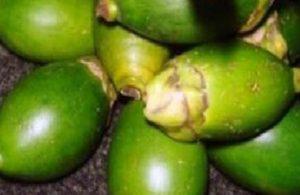 manfaat buah jambe