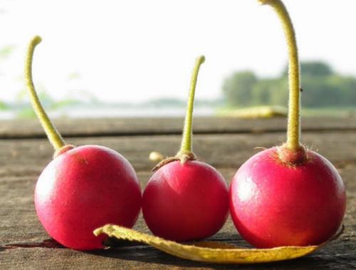 20 Manfaat Buah Talok Mencengangkan Sebagai Super Food