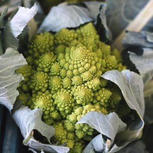 Manfaat Tanaman Bunga Brokoli Kuning Yang Belum Banyak Diketahui