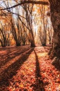 7 Manfaat Musim Gugur Bagi Kehidupan Manusia