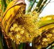 6 Manfaat Bunga Kelapa Bagi Kehidupan Manusia Yang Perlu Diketahui