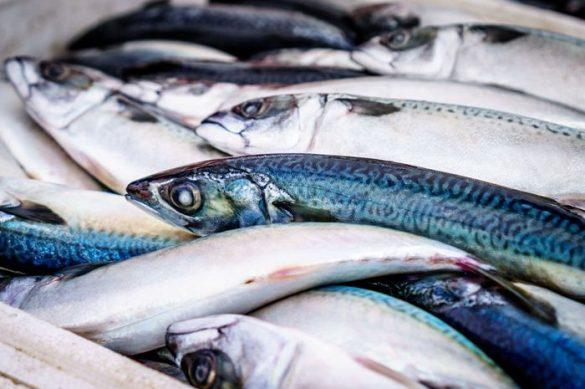17 Manfaat Ikan Makarel yang Tinggi Omega 3